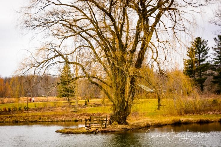 2019_03_14__Holden Arboretum_0012