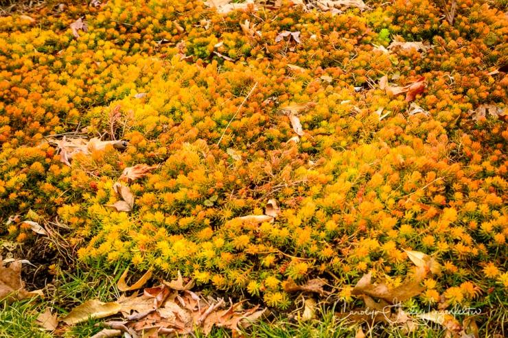 2019_03_14__Holden Arboretum_0039