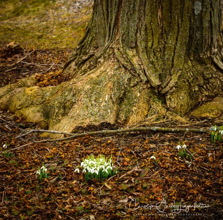 2019_03_14__Holden Arboretum_0042