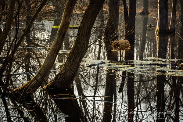 2019_04_06__Chagrin River Park_0027