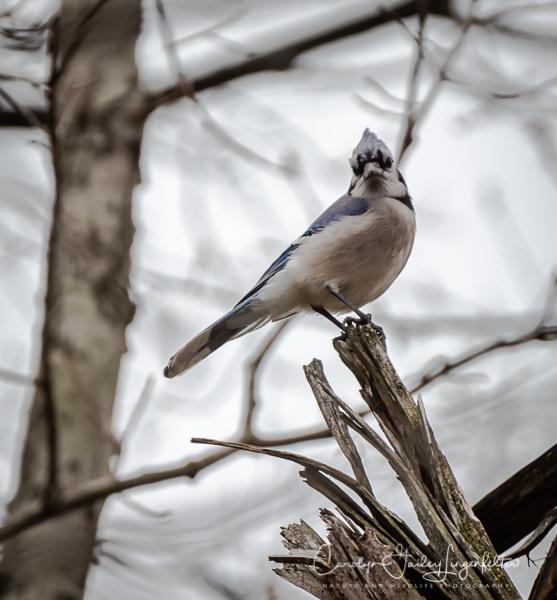 2019_04_24__Spring trailwalking_0369