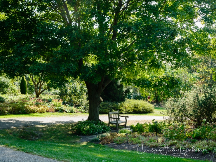 2019_10_01__Holden Arboretum_0002
