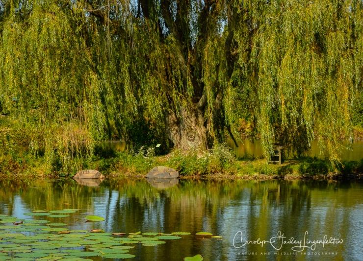 2019_10_01__Holden Arboretum_0007