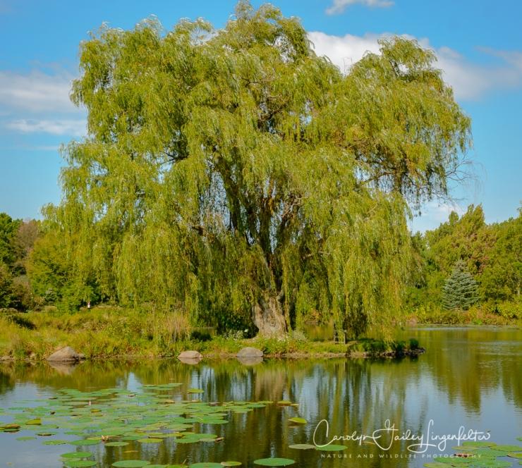 2019_10_01__Holden Arboretum_0009