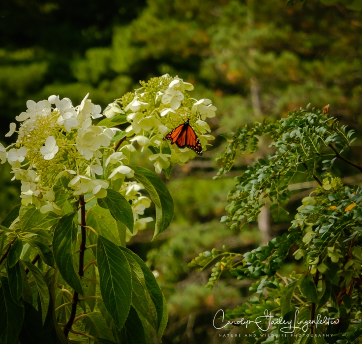 2019_10_01__Holden Arboretum_0019