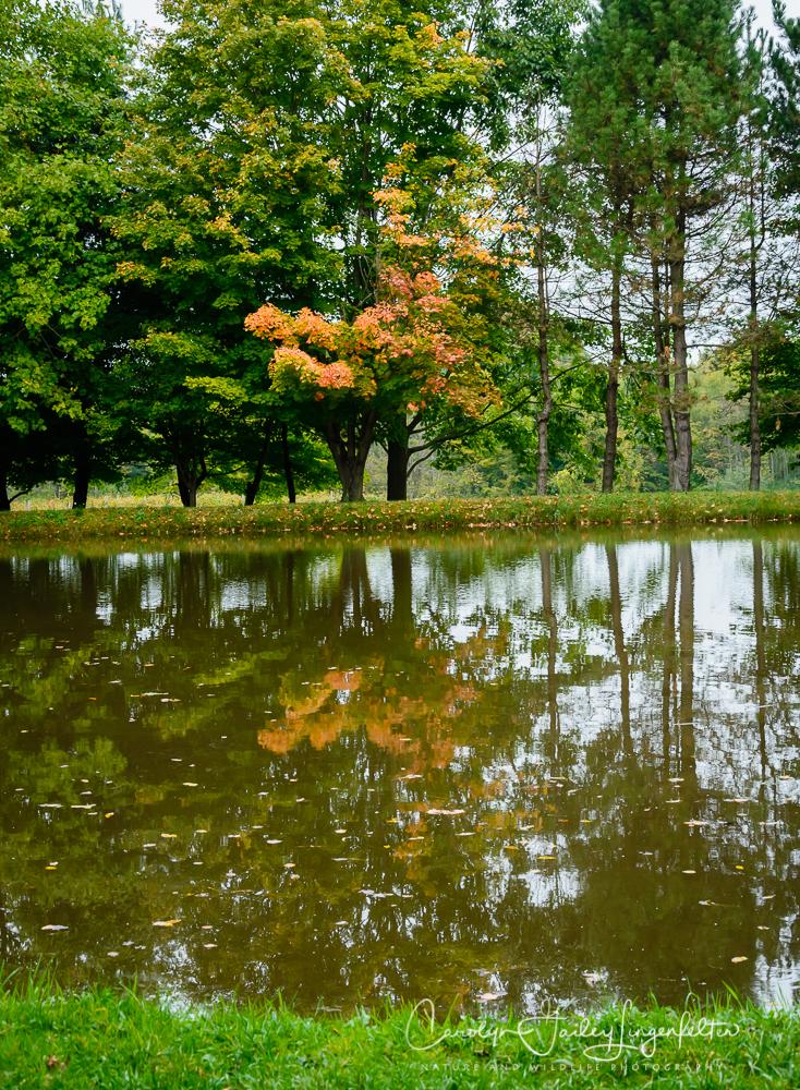 2019_10_02__Almost Autumn_0001