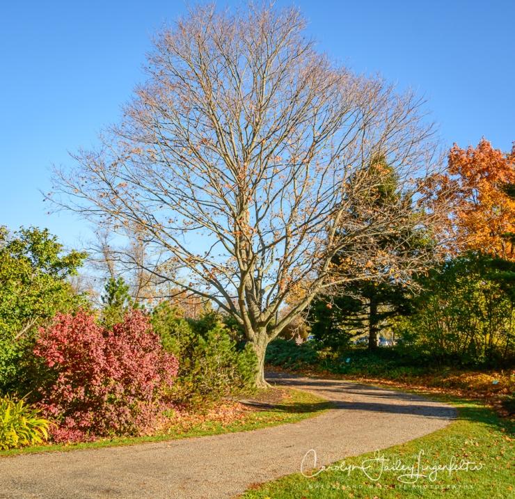 2019_10_28__Holden Arboretum_0026