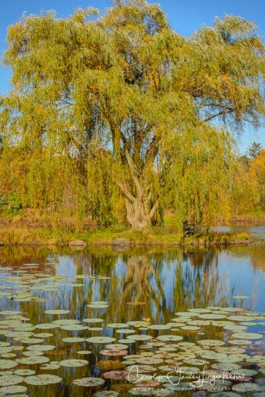 2019_10_28__Holden Arboretum_0030