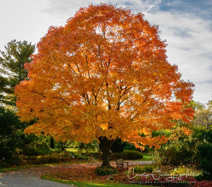 2019_10_21__Autumn in the Arboretum_0001
