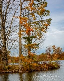 Island in Corning Lake