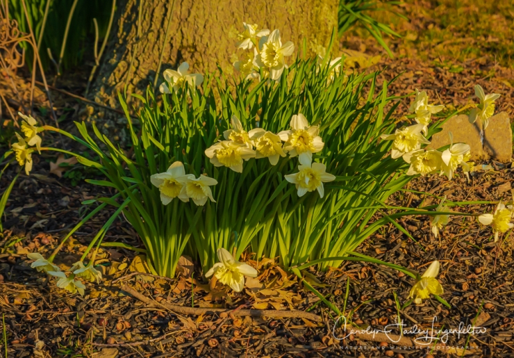 2020_04_15__Early Spring_0009