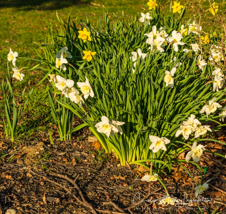 2020_04_15__Early Spring_0020