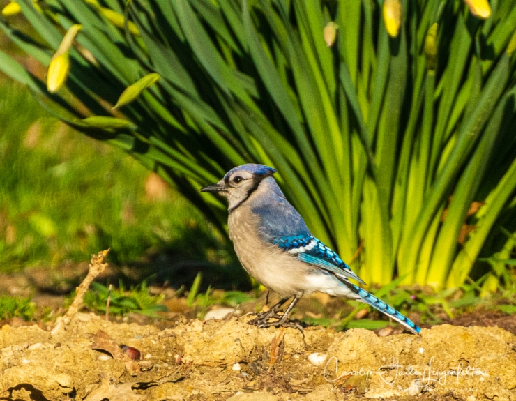 2020_04_15__Early Spring_0035