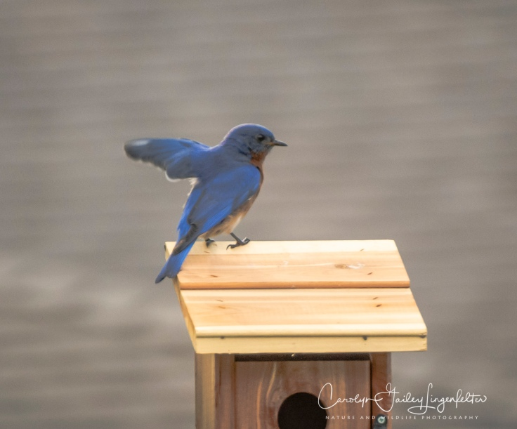 2020_06_23__backyard birding_0001