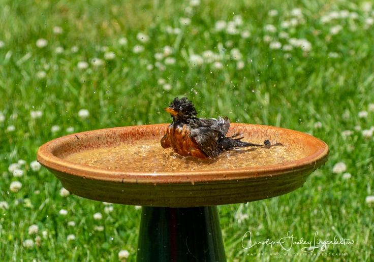 2020_06_25__backyard birding_0007