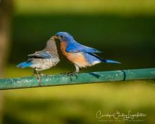 2020_06_30__Backyard birding_0005