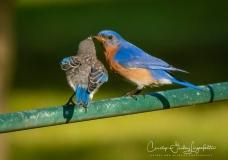 2020_06_30__Backyard birding_0006