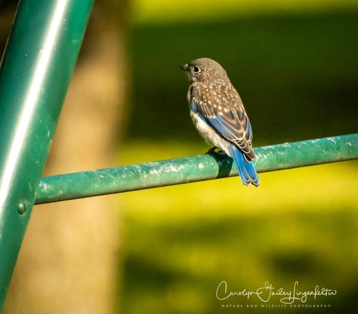 2020_06_30__Backyard birding_0011
