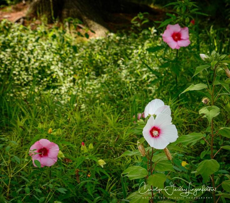 Holden Arboretum_08_12_0018