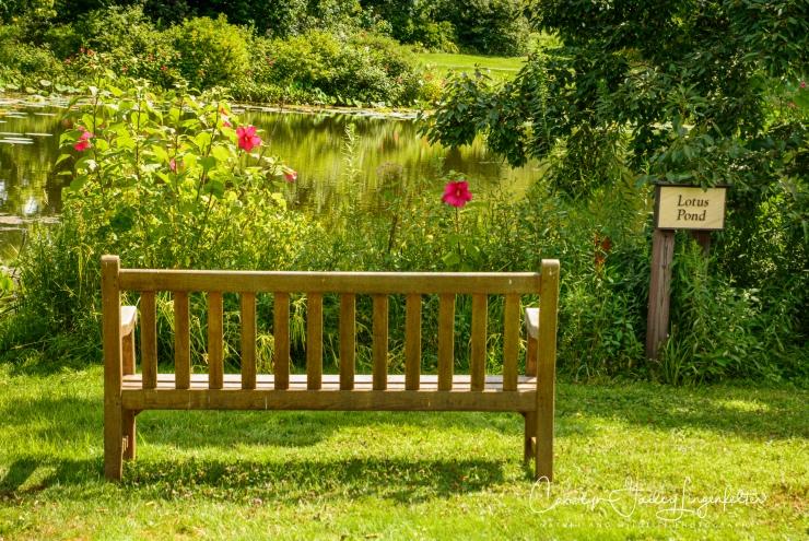 Holden Arboretum_08_12_0031