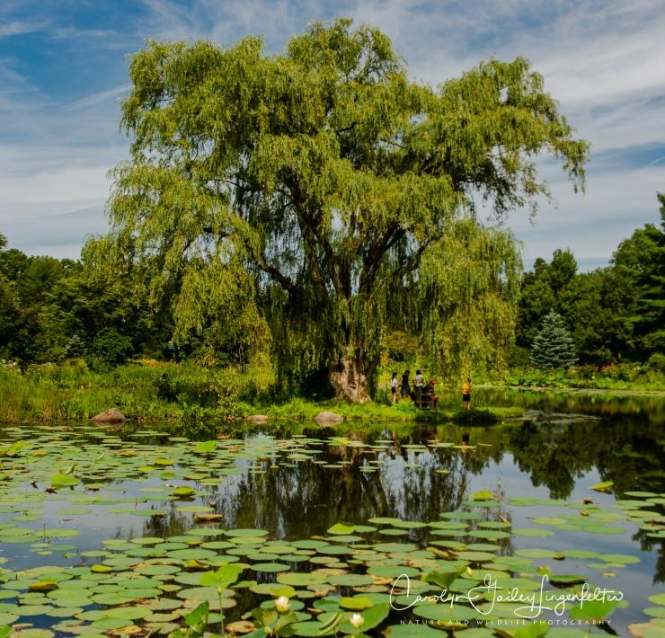 Holden Arboretum_08_12_0042