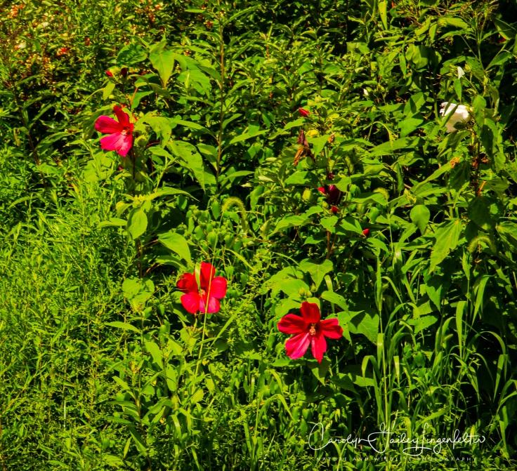 Holden Arboretum_08_12_0053