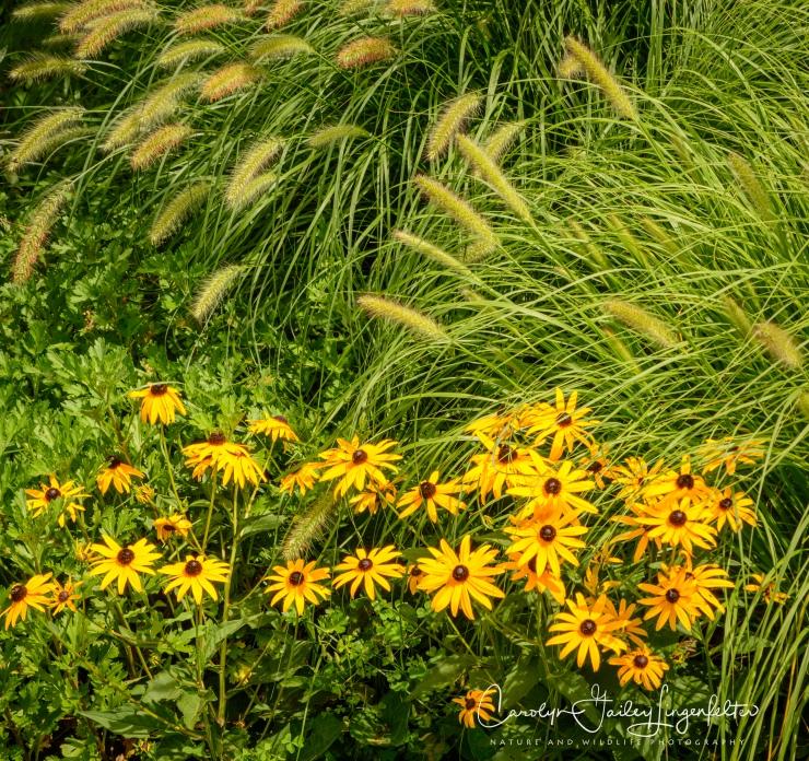 Holden Arboretum_08_12_0061